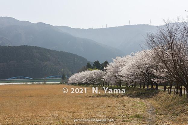yamanao999_2979