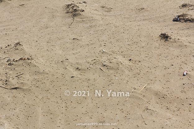 yamanao999_2982