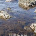 Photos: 2021年4月3日、大島海岸風景