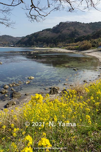 yamanao999_3011