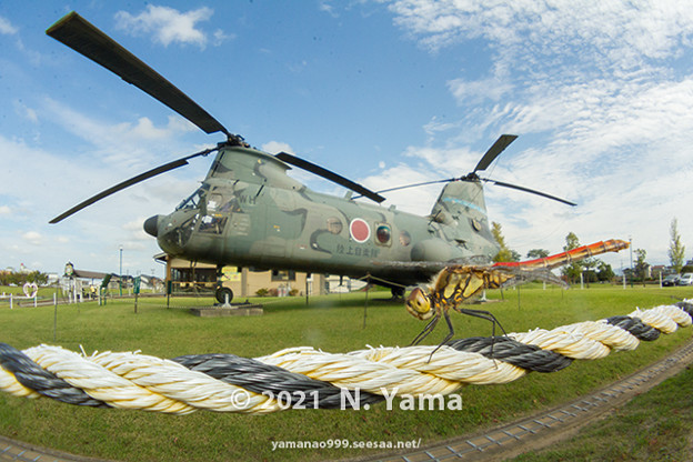 yamanao999_insect2021_226