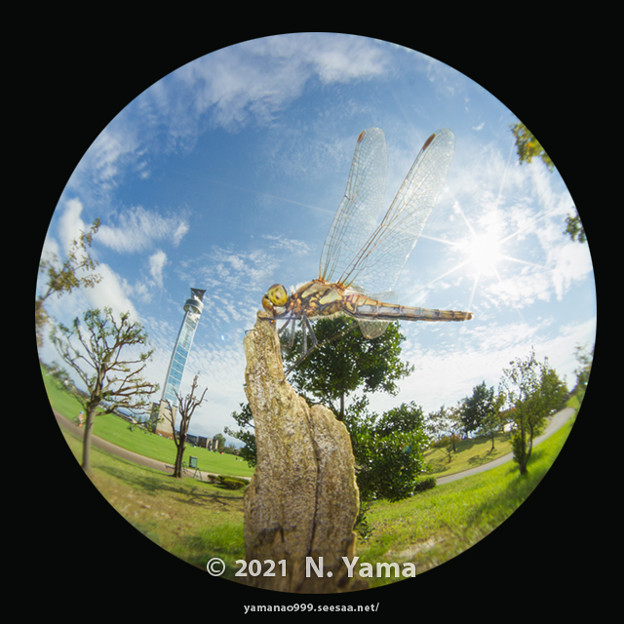 yamanao999_insect2021_227