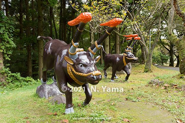 倶利伽羅火牛