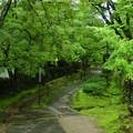 金剛輪寺 雨天