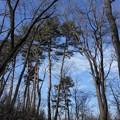 Photos: 冬の小径