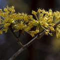 Photos: 反る花弁
