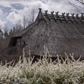 茅葺屋根とユキヤナギ