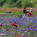 Photos: 花畑で