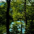 Photos: 新緑の池