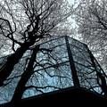 Photos: 幹と枝と東京タワー