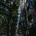 Photos: ある日の歩道