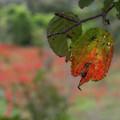 Photos: 進む秋