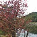 ベニマンサク湖沿いの紅葉