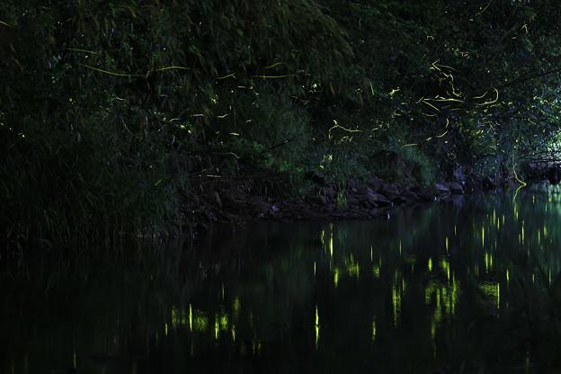 Photos: 火垂る その二