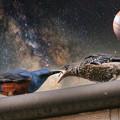 銀河のイソヒヨドリ