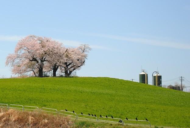 Photos: 花見かな