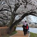 あるある桜ショット