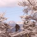 Photos: 桜に吾妻連峰が!
