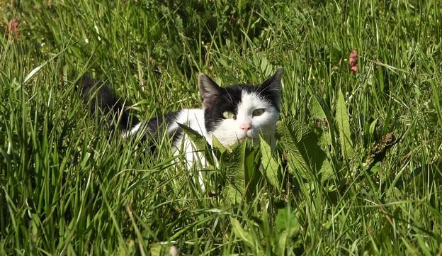 ネコの狩り