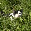 Photos: ネコの狩り