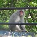 Photos: 野生の猿
