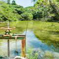 Photos: 野鳥の森 栗ヶ谷池溜池