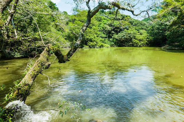 野鳥の森 栗ヶ谷池溜池