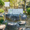 Photos: 野鳥の森 動物たちの供養碑