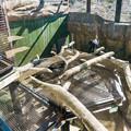 猛獣館299 ジャガーエリア