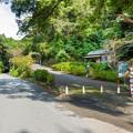 お茶ヶ崎展望台への道