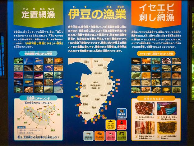 伊豆の漁業