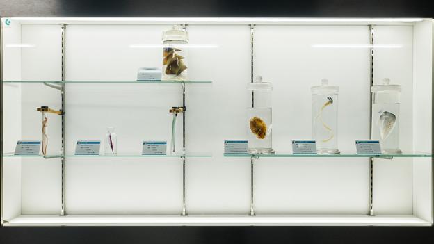 みとしーラボの標本