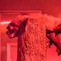 Photos: 夜行性動物館のハクビシン