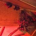 Photos: 夜行性動物館のルーセットオオコウモリ
