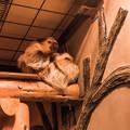 Photos: 夜行性動物館のフタユビナマケモノ