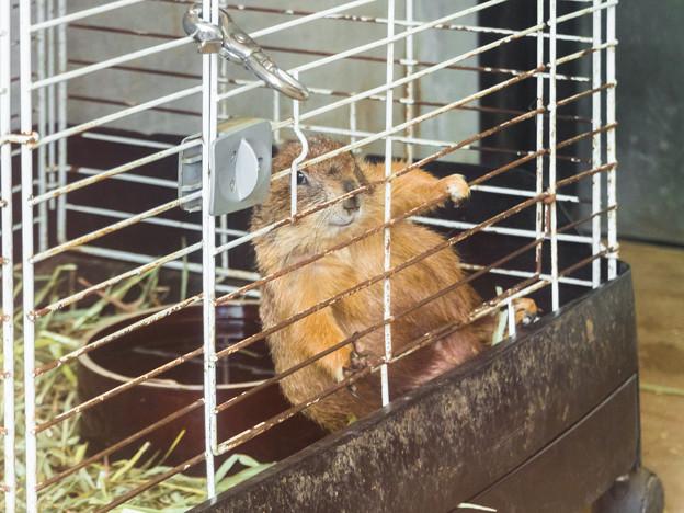 ふれあい動物園のプレーリードッグ