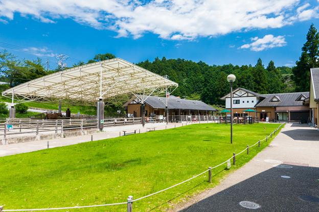 日本平動物園 ふれあい動物園