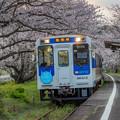 松浦鉄道 桜のトンネル 2