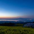 白木峰高原 桜と菜の花