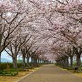 おの桜づつみ回廊 2
