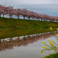 おの桜づつみ回廊 3