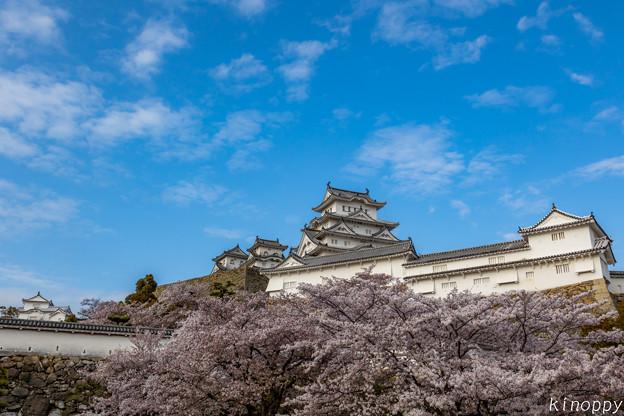 姫路城 桜 3