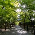 Photos: 光明寺 新緑 2