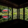 Photos: 旧竹林院 新緑