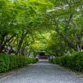 Photos: 西教寺 新緑
