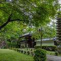 Photos: 西教寺 新緑 2
