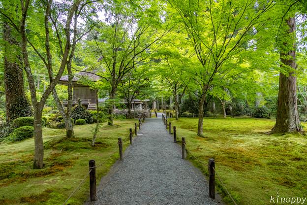 Photos: 三千院 新緑