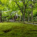 Photos: 三千院 新緑 2
