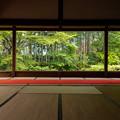 Photos: 宝泉院 新緑 3