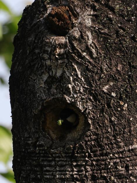 巣穴から顔を出したところ